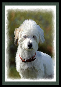 white terrier painting from photo